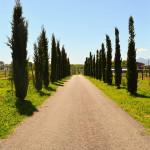 Il Viale D'ingresso dell'Agriturismo